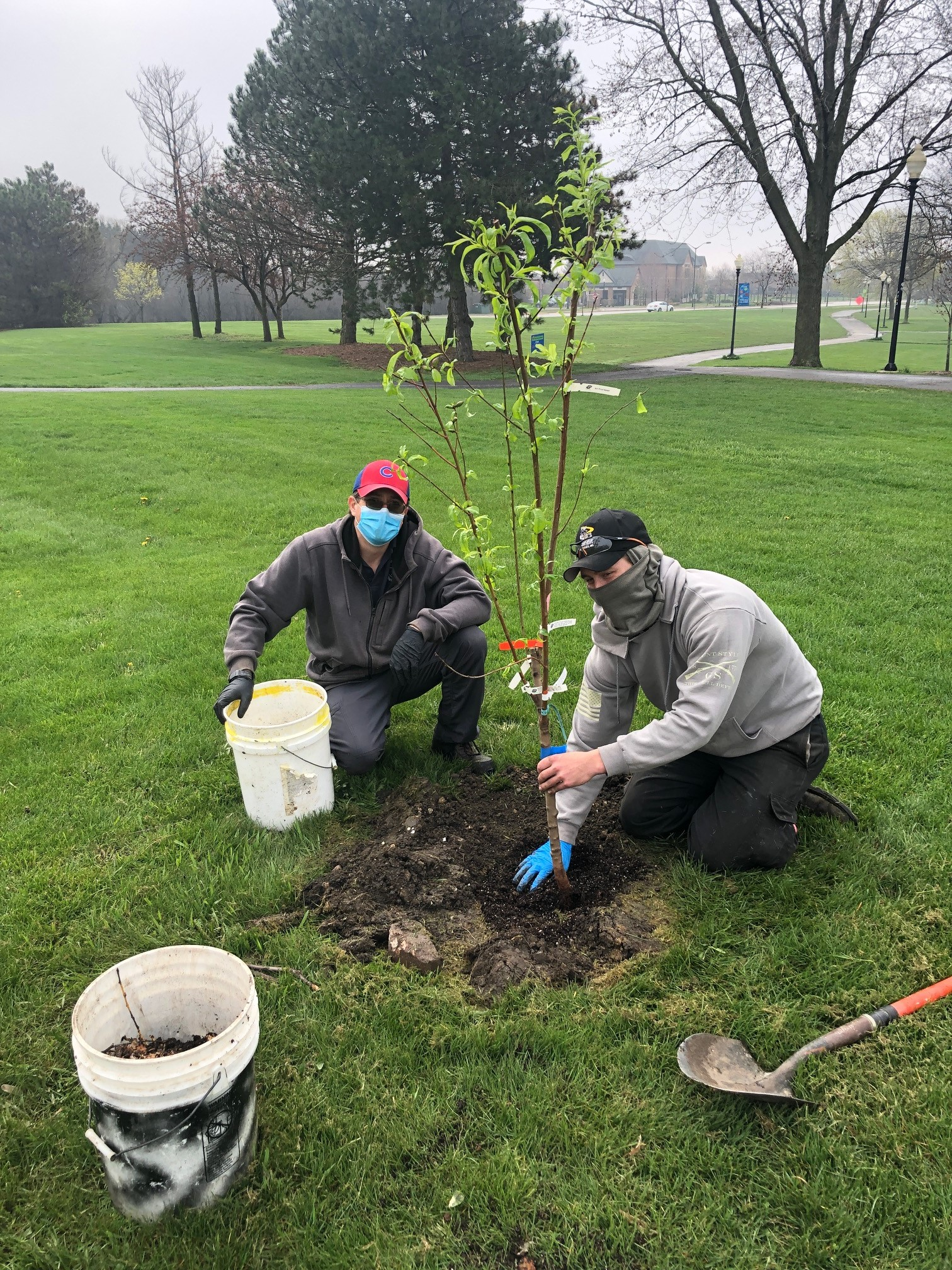 Fruit Trees in the Parks